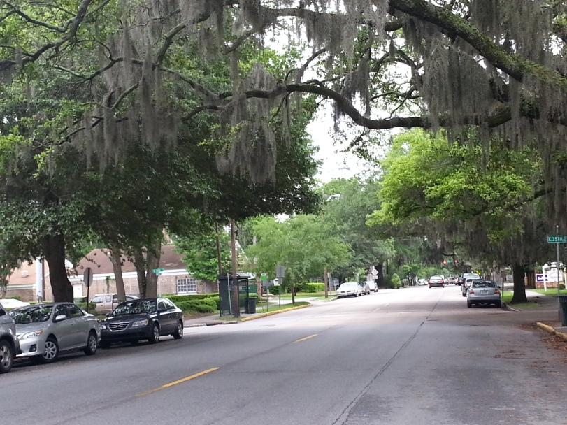 Shaggy Trees in Savannah