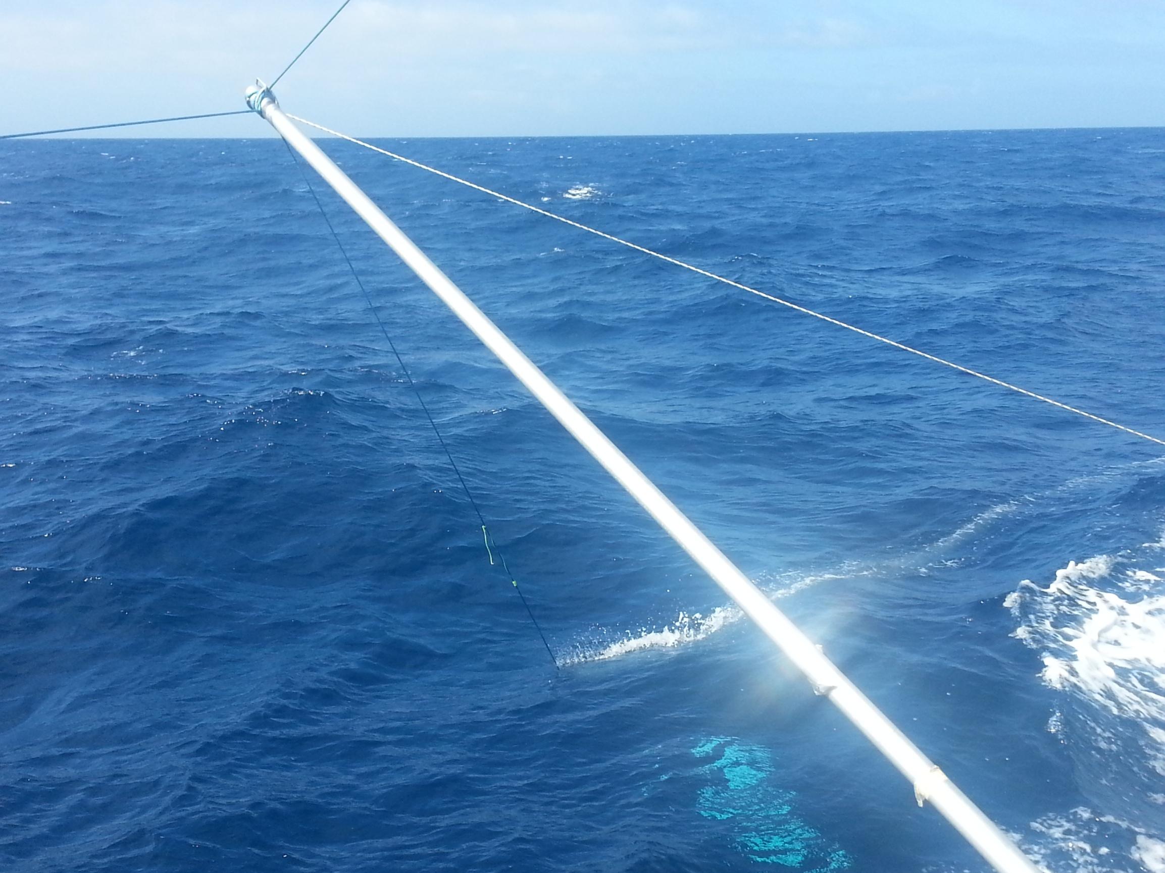Mid-Atlantic Blue Ocean