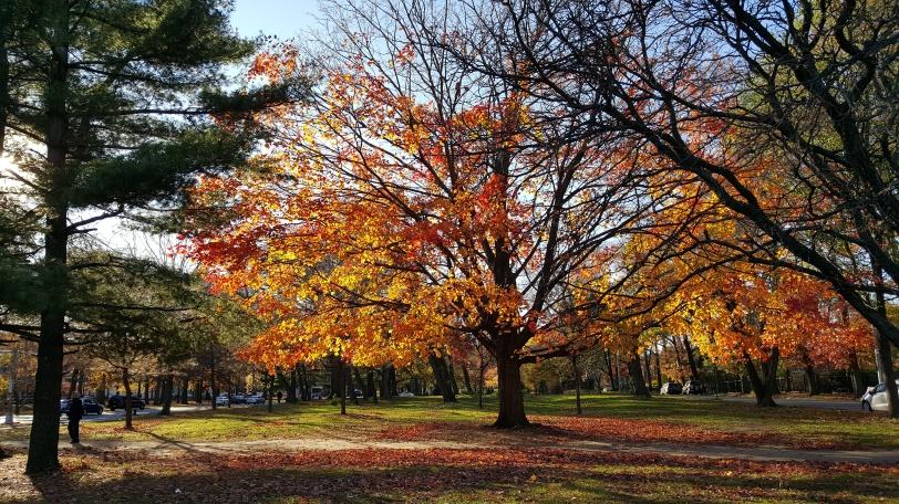 Autumn along Pelham Parkway in the Bronx, NY