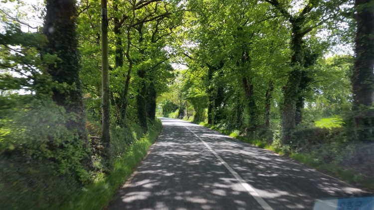 A typical tree lined road. I will truly miss the beauty of Ireland and it's warm denizens.